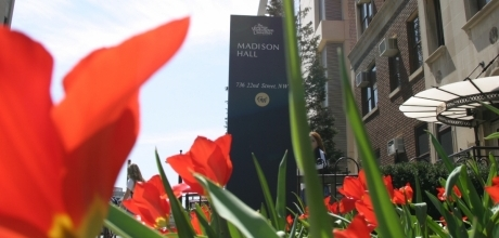 Tulips outside of Madison Hall